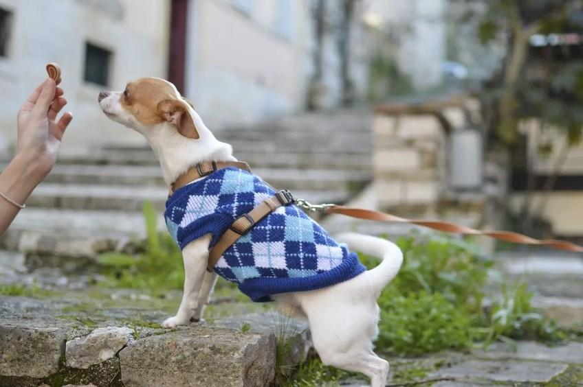 professional dog-friendly cottages, dog treats