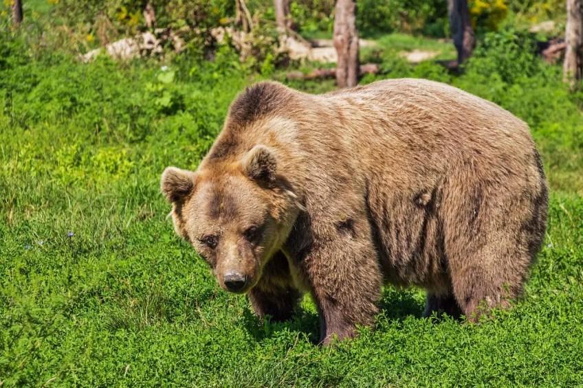wilderness hikes, wildlife, bears