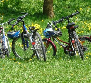 bicycles 6895 1280