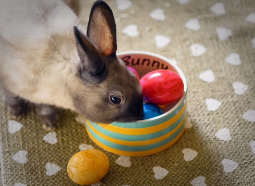 easter gifts for pets, bunny, rabbit, eggs