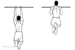 Close_Grip_Pullup_Chinup_M_WorkoutLabs.png