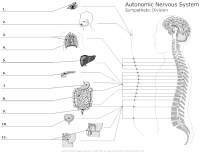 Nervous System Worksheet! - The Fantastic Nervous System ...