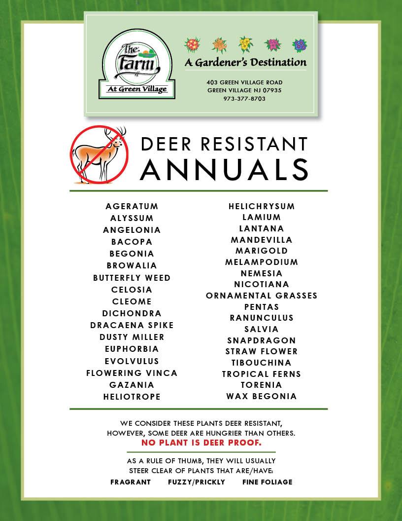 Celosia Deer Resistant : celosia, resistant, Resistant, Annuals, Perennials, Green, Village