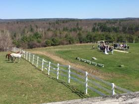 Horses on the Farm watching the rustic wedding