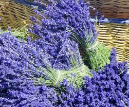 upick lavender