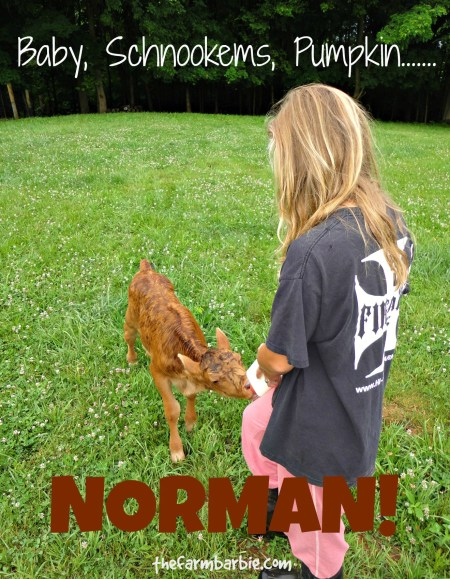 norman 1
