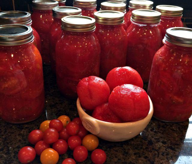 tomato 11