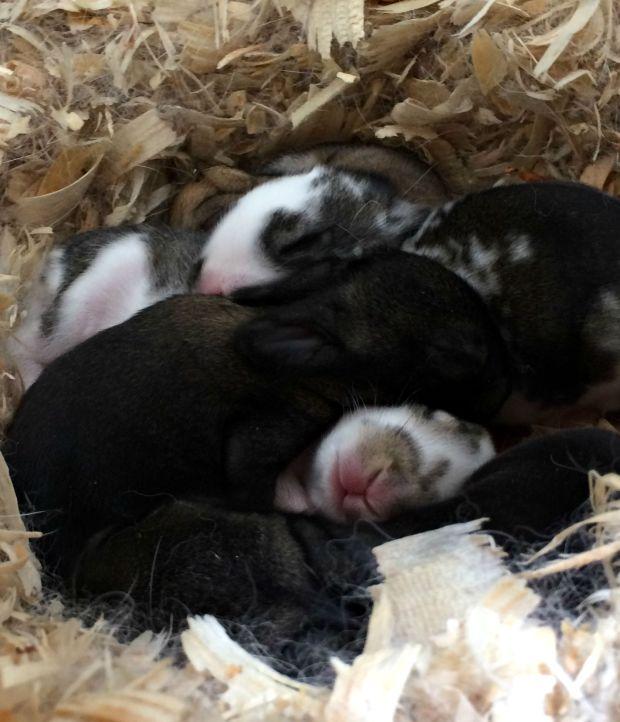 baby bunny 7