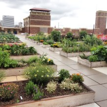 Beautiful Rothenberg Rooftop Garden