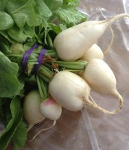 Radishes from Rothenberg Rooftop Garden