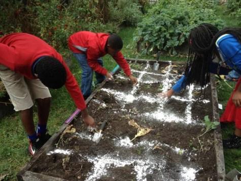 Square-foot gardening