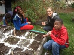 Planting greens, peas, and radishes