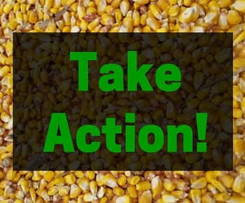 GMO Labeling Federal Action