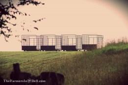 hay wagons - TheFarmersInTheDell.com