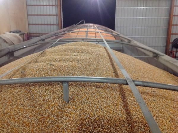 Popcorn via thefarmerslife.com