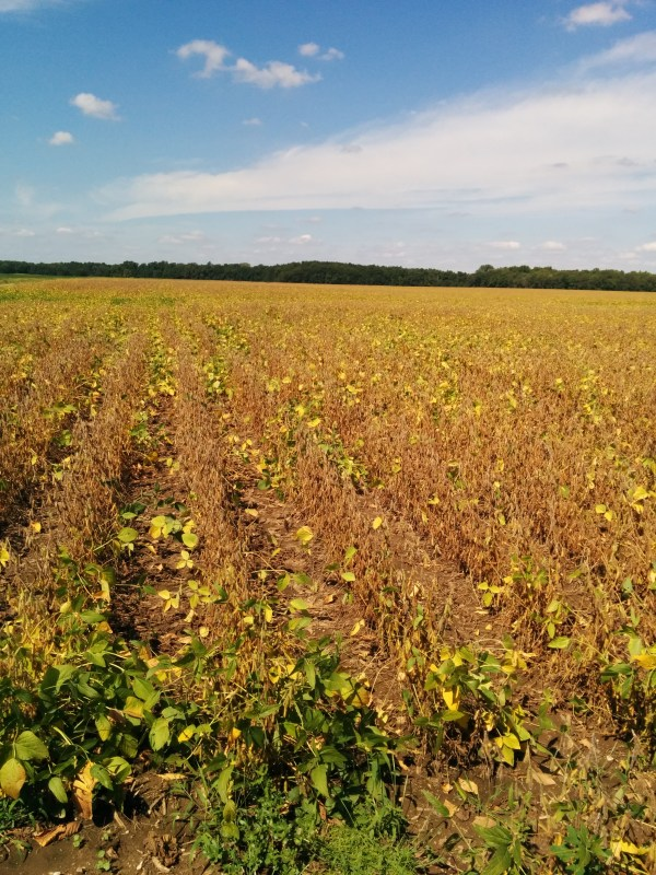 Soybeans via thefarmerslife.com