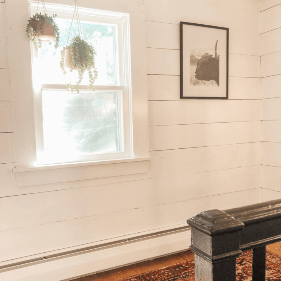 A white shiplap wall with a picture of a buffalo and a small window.