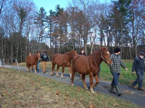 2016_11_10-11-draft-horse-workshop-18