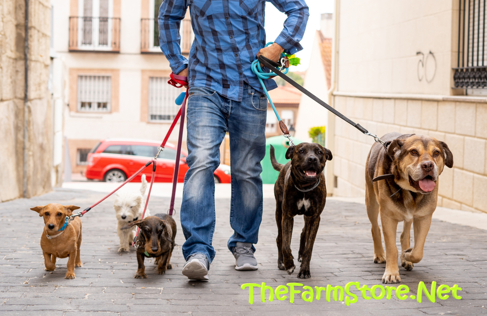 The Best Dog Food with Grains Reviews 2020