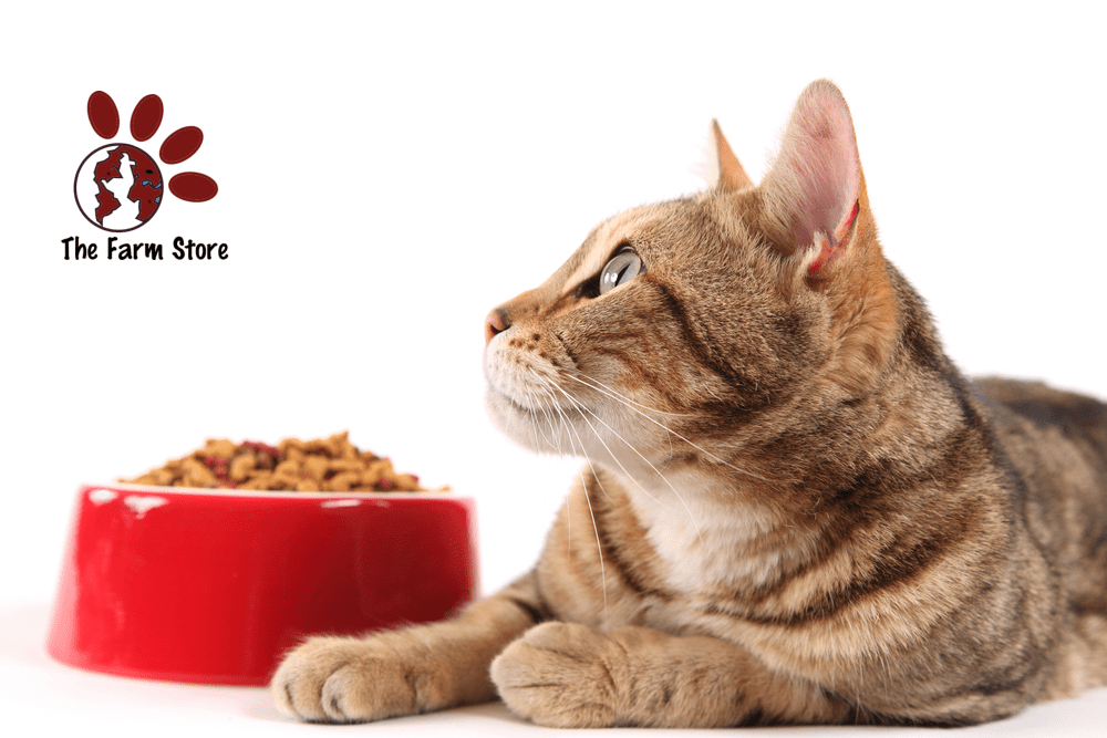 Best Freeze-Dried Cat Food Reviews in 2020