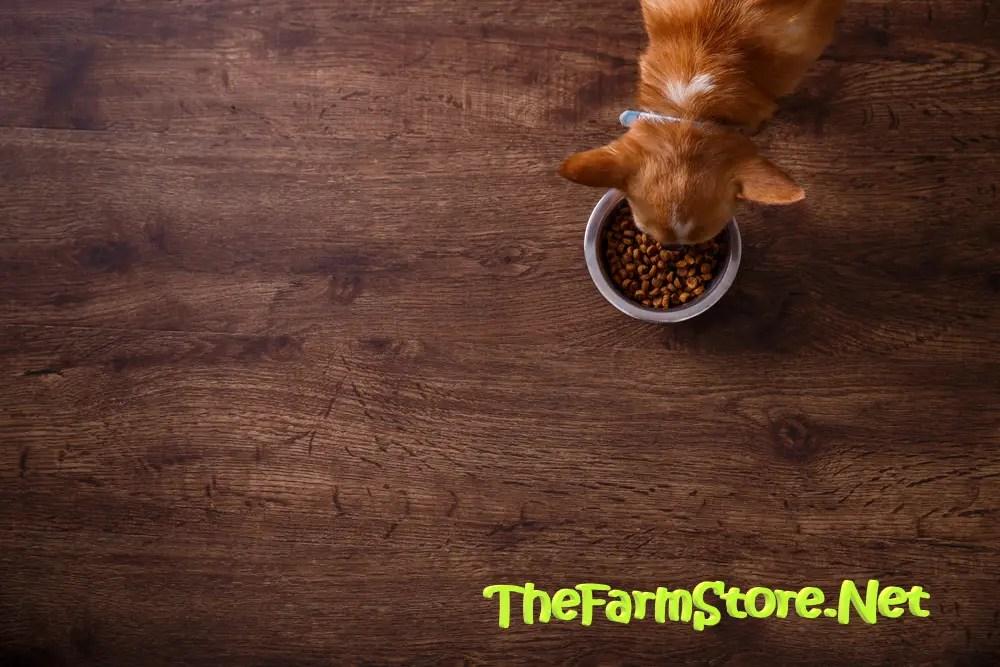 best tasting dry dog foods