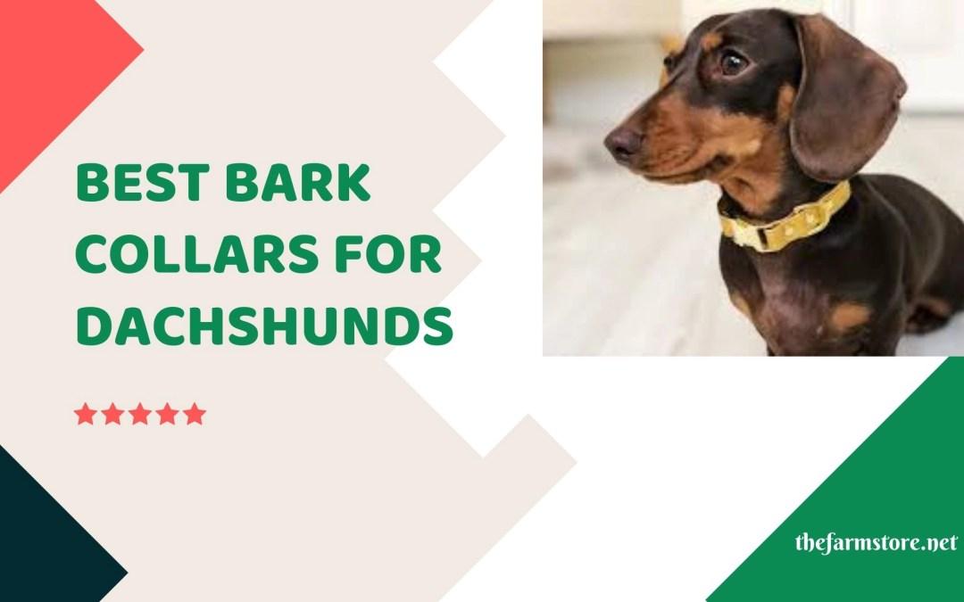Best Bark Collars for Dachshunds