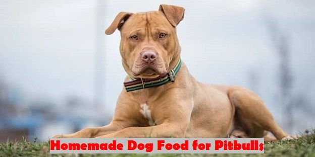Homemade Dog Food for Pitbulls
