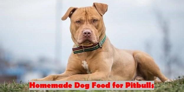 Homemade Dog Food for Pitbulls