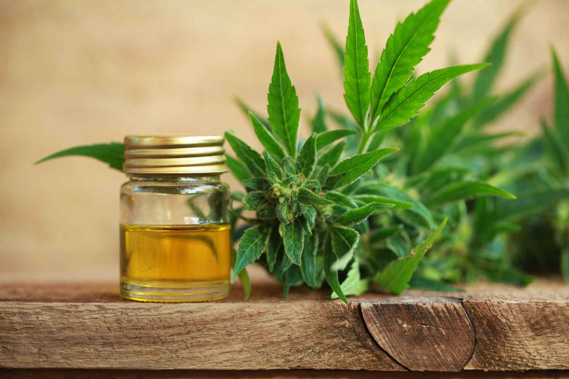 Epilepsy Study Has Found That One Type of CBD Is Superior
