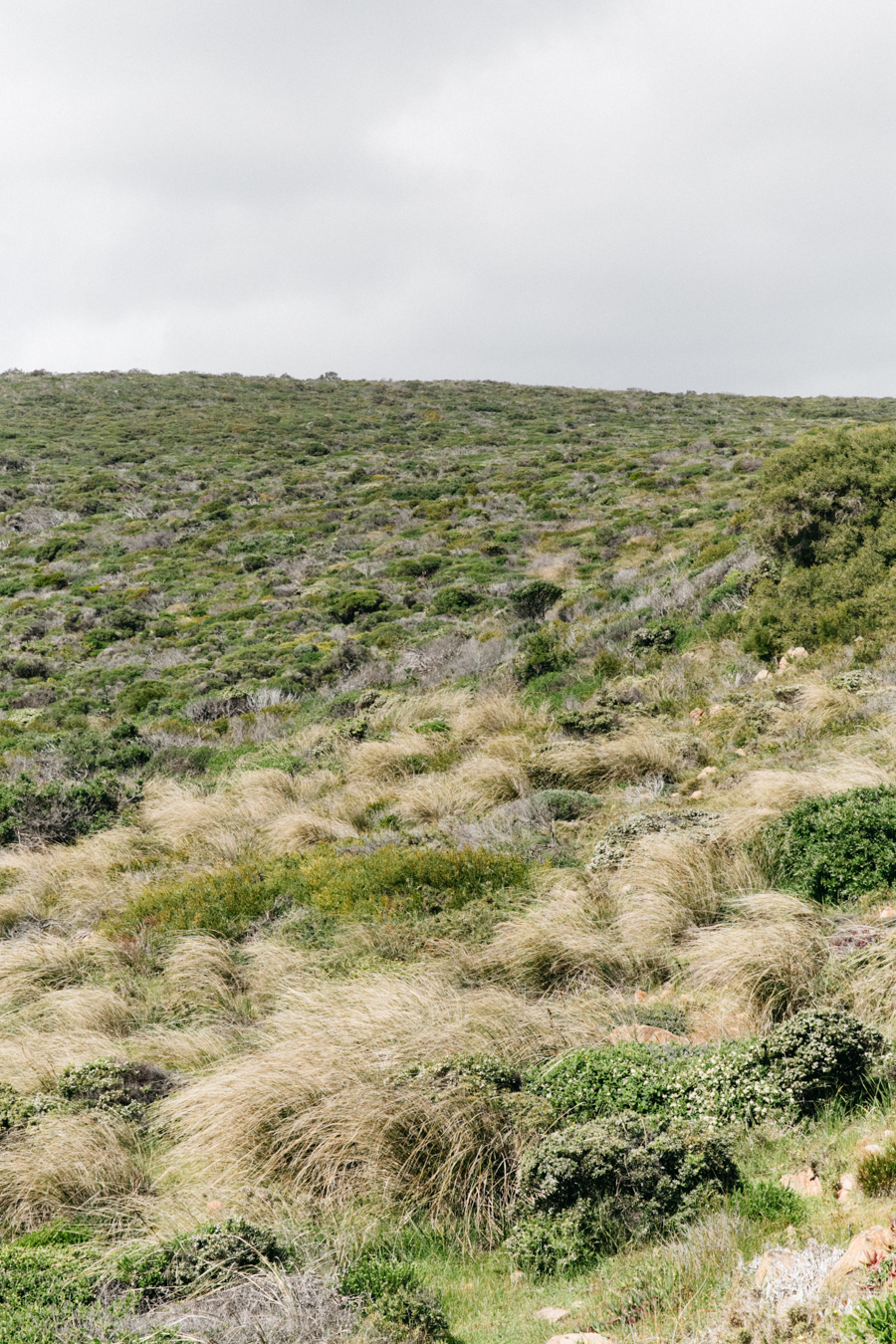Australian landscapes in the South-West.