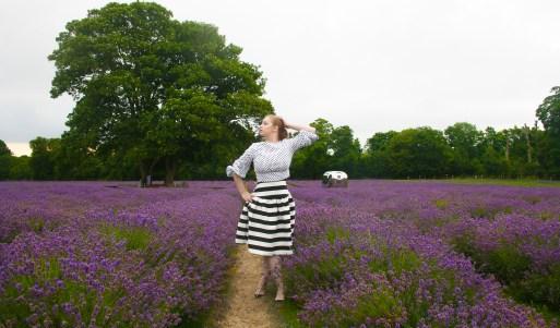 Banstead Lavender Field