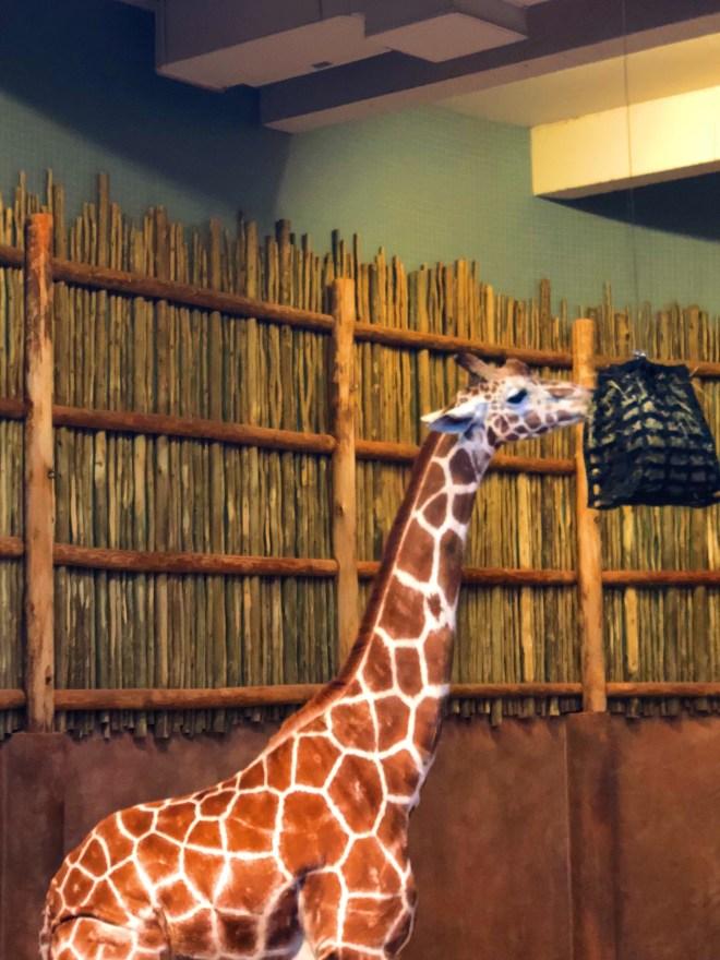 #nightatthezoo, Lincoln park zoo, Chicago zoo, zoo animal, #adultnightatthezoo, chicago blogger, giraffe