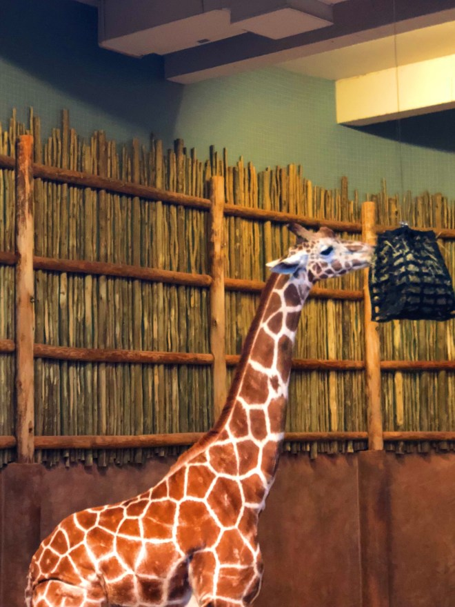 #nightatthezoo, Lincoln park zoo, Chicago zoo, zoo animal, #adultnightatthezoo, chicago blogger, giraffe