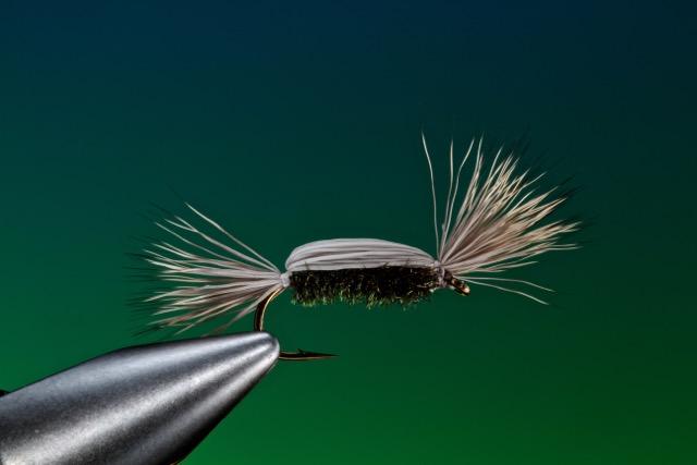 fly tying Tom Thumb dry fly