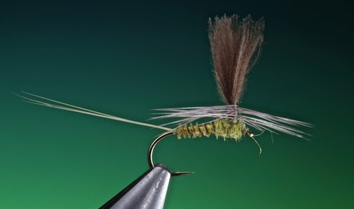 fly tying Blue winged olive