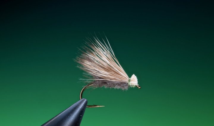 fly tying CDC Elk hair caddis dry fly