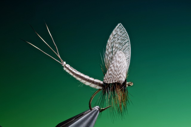 Extended mayfly body pattern tied by Barry Ord Clarke