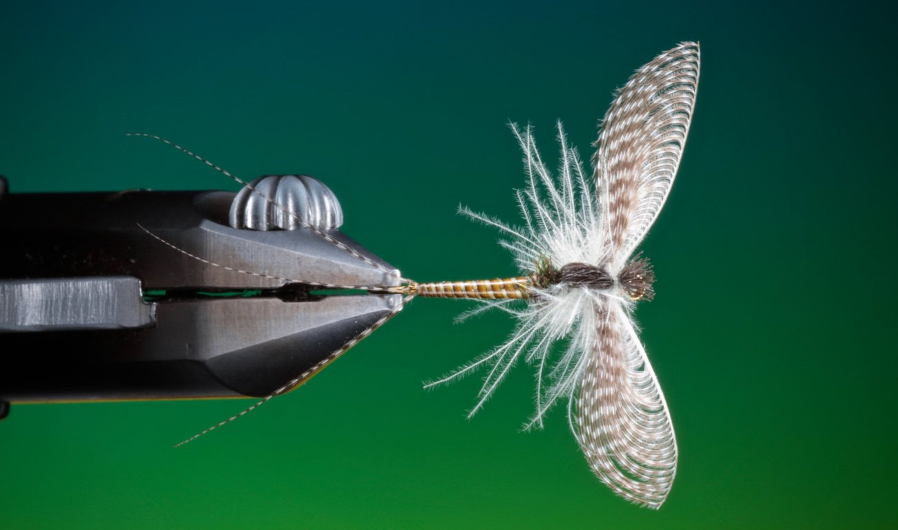 Mayfly spinner Wally wing tied by Barry Ord Clarke