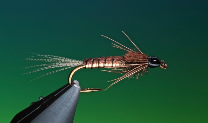 Copper Nymph