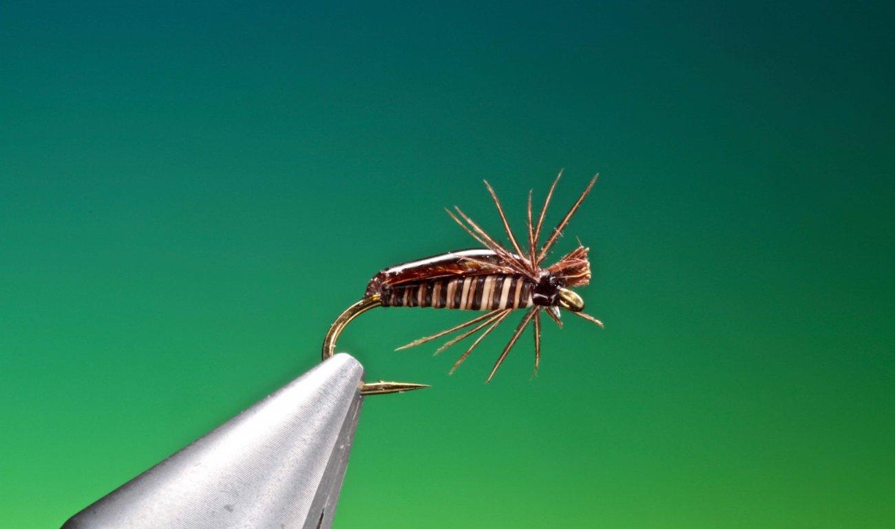 Corixa - water boatman fly tied by Barry Ord Clarke