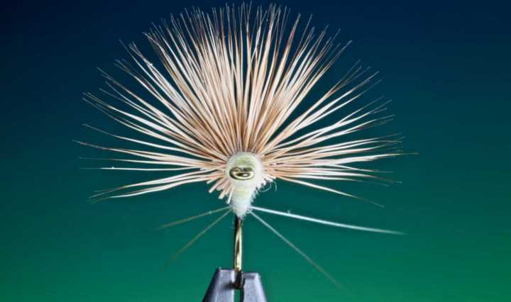 Pmd fly tying by Barry Ord Clarke