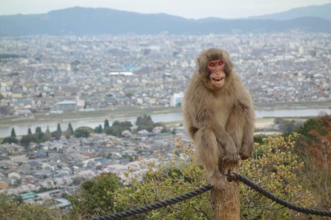 Arashiyama Monkey Park and Kyoto setting the scene