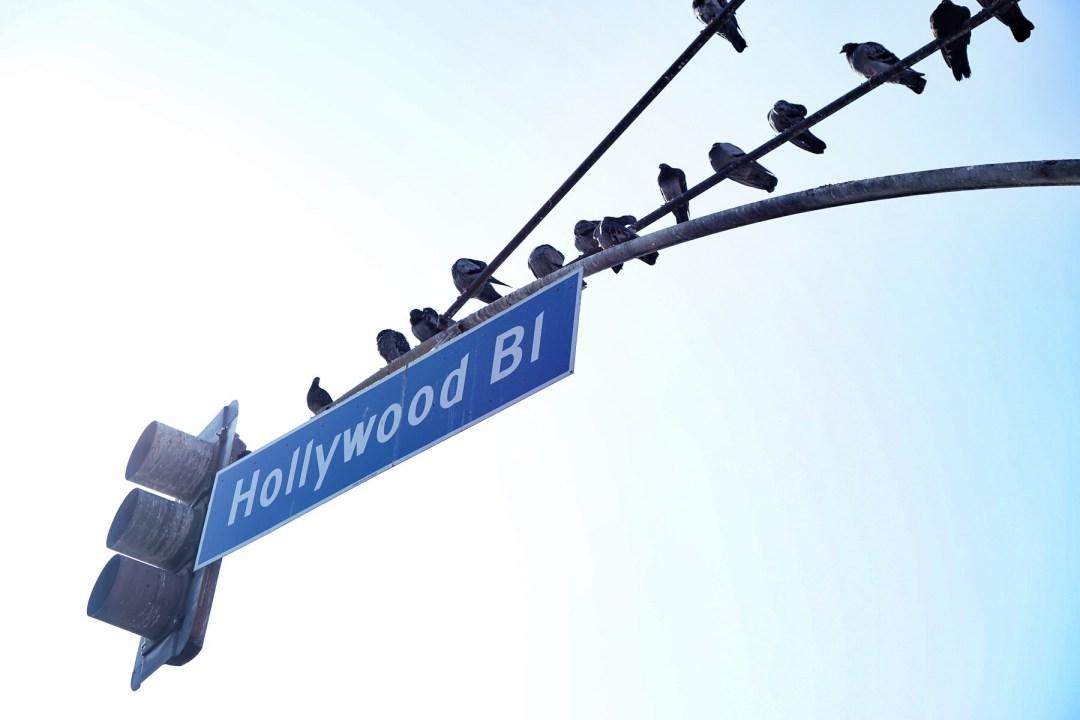 Hollywood - TheFebruaryFox.com