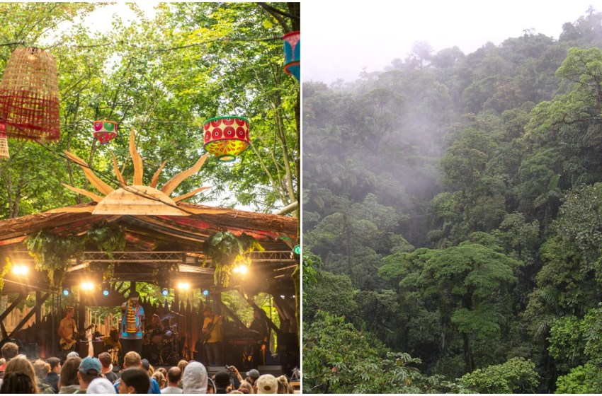 Boomtown are growing a tropical forest with almost 50,000 trees