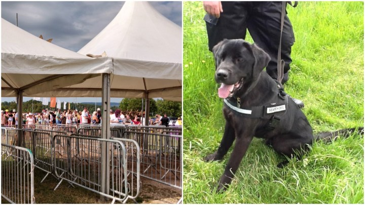 Sniffer dogs at festivals