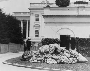 A pile of White House wool being bagged for auction. (Library of Congress)