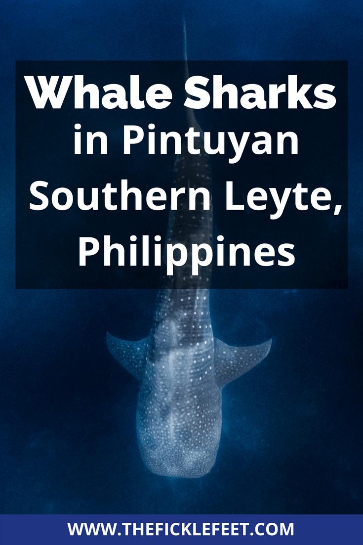 Whale Shark Pintuyan Southern Leyte-2