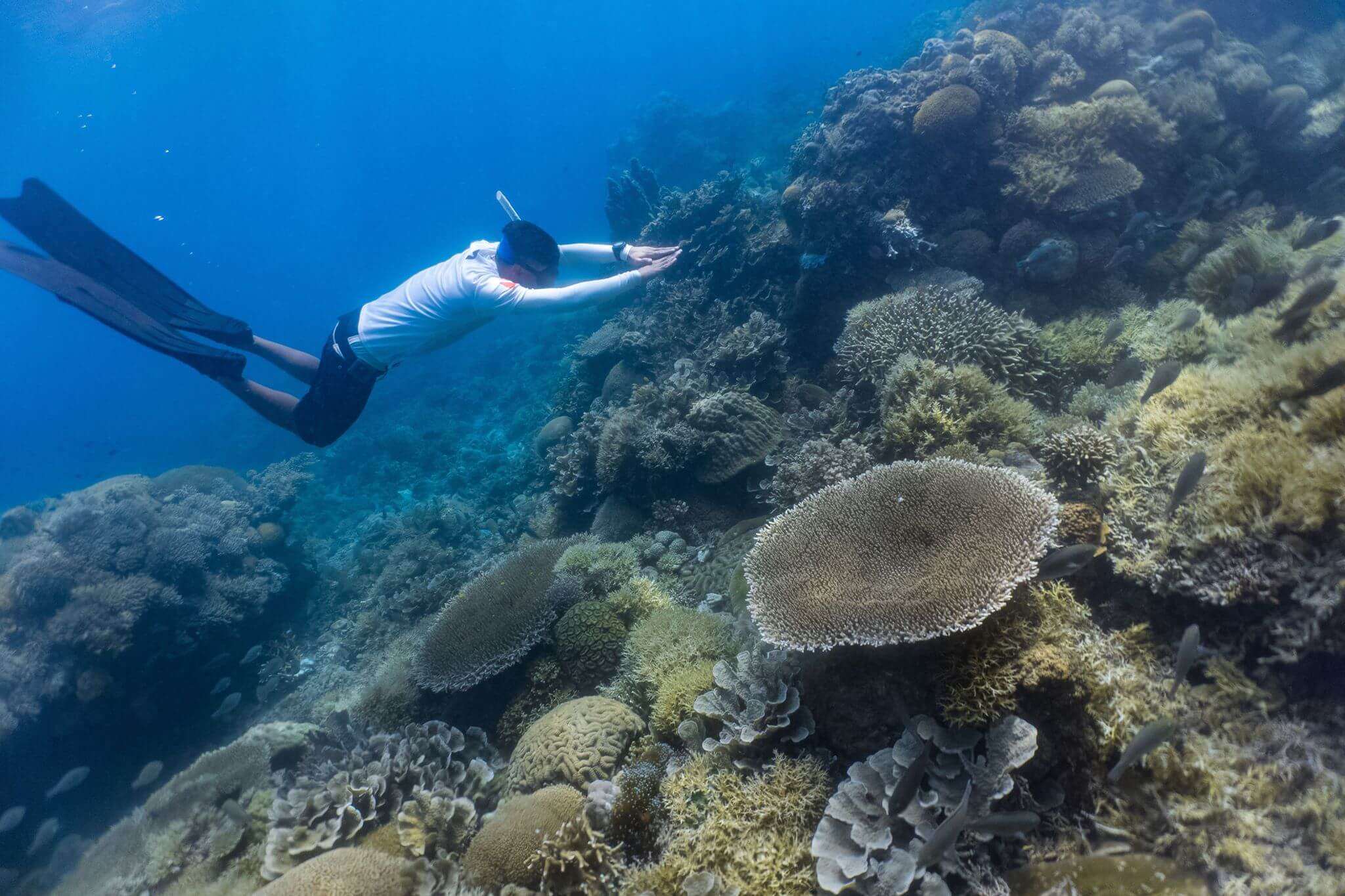 freediving-in-philippines-the-ultimate-list