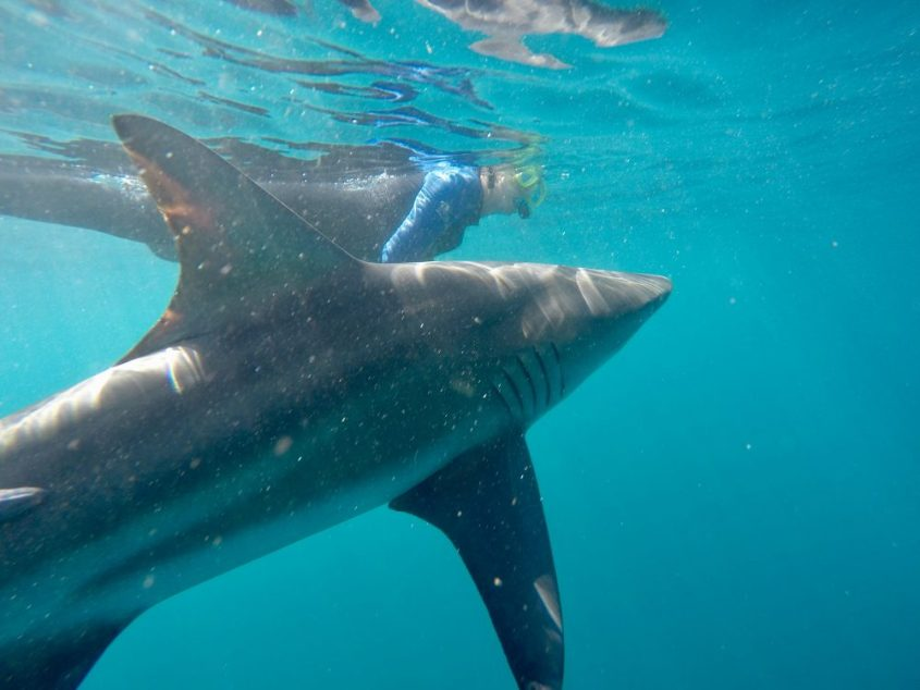 13 Amazing Wildlife Encounters in the Ocean from Different Parts of the World 6