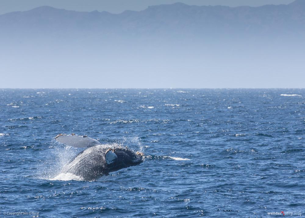 Wildlife encounters in the ocean